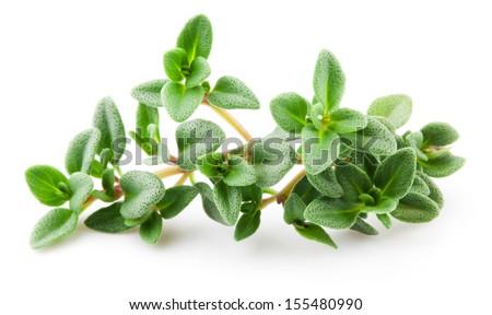 Thyme isolated on white background. Macro - stock photo