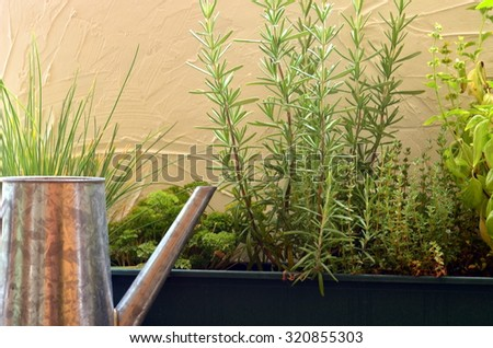 Thyme, rosemary, basil, parsley and chives in green window box