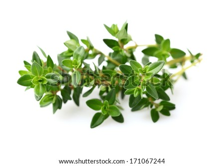 Thyme spice - stock photo