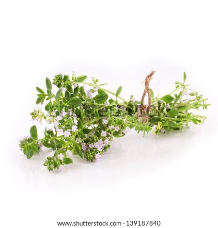 Thymus isolated on a white background