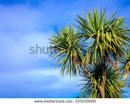Ti kouka â?? New Zealand cabbage palm tree, landscape with a blue sky - stock photo