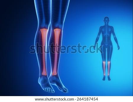Tibia anatomy medical scan  - stock photo