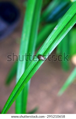 Tick sitting on a blade of grass - stock photo
