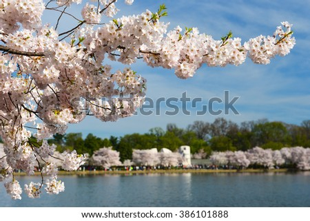 Tidal Basin during Cherry Blossom Festival - Washington DC USA - stock photo