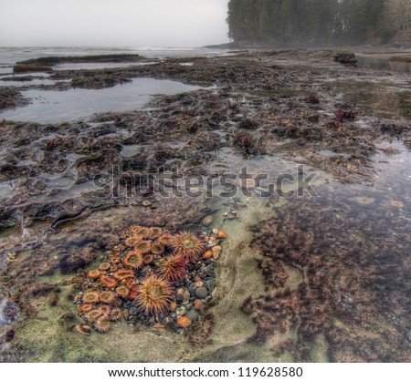 Tidal pool filled with living botanical life and anemones - stock photo