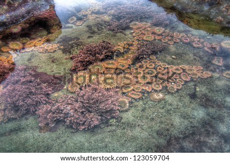 Tidal pool with many colorful sea creatures - stock photo