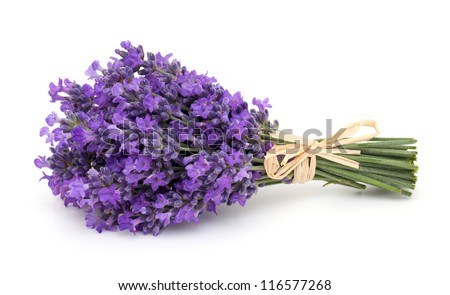 tied bunch of lavender isolated on white background - stock photo