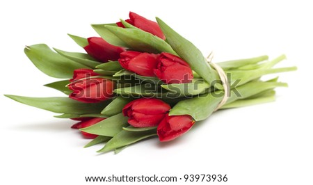 tied red tulips isolated on white background
