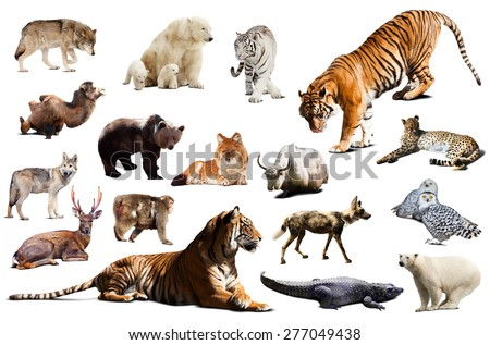 Tiger and other asian fauna. Isolated on white background  - stock photo