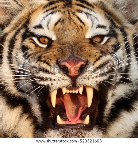 Dangerous Animal Stock Images, Royalty-Free Images ...