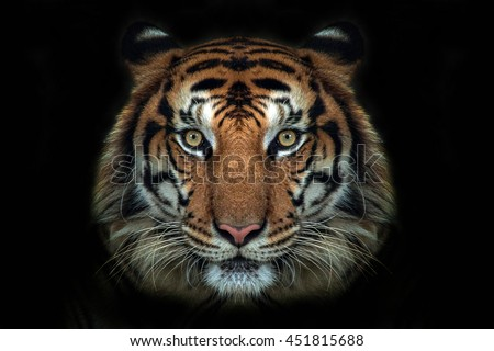 tiger face - stock photo