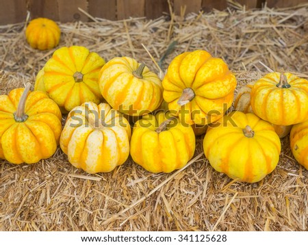 Tiger is miniature pumpkin with mottled orange over a yellow base. Ribs are pronounced at the top and fade to a smooth bottom. - stock photo