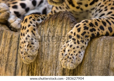 Tiger leg - stock photo