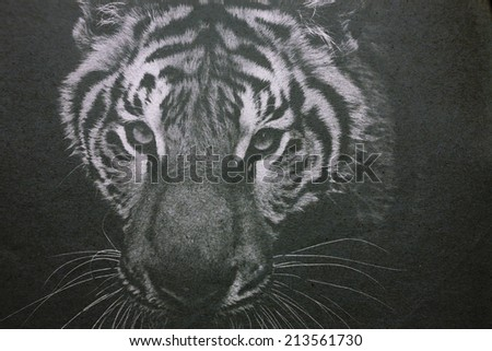 tiger on paper - stock photo