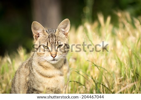 Tiger patterned stray cat sitting in the grass and posing to the camera