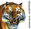 Tiger portrait drawing  - stock photo