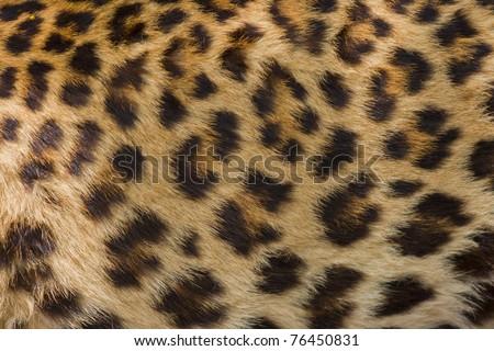 tiger skin - stock photo