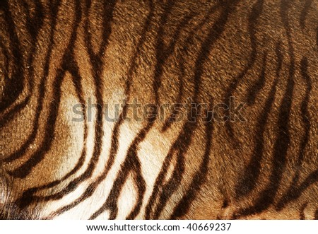 Tiger Skin Background - stock photo