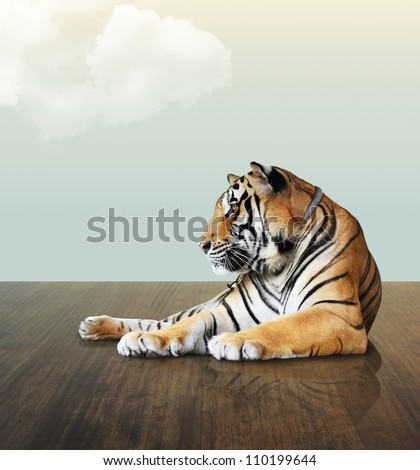 tiger under the sky with cloud on wood floor - stock photo