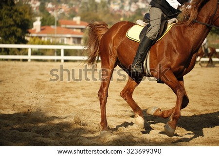 Tight close-up image of horse and rider in the riding course - stock photo