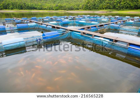Tilapia fish farm in Thailand - stock photo