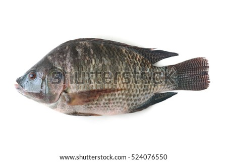 tilapia fish isolated on white