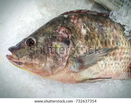 Tilapia fish on the Ice pile