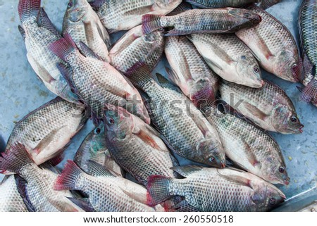 tilapia fishes in the fresh market, Thailand - stock photo
