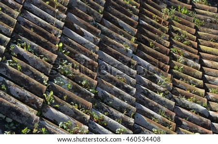 Tiled roof with plants growing in it at Monte near Funchal in Madeira, Portugal