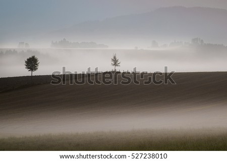 Tillage,field,trees and mountains in fog