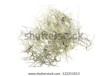 Tillandsia isolated on white background