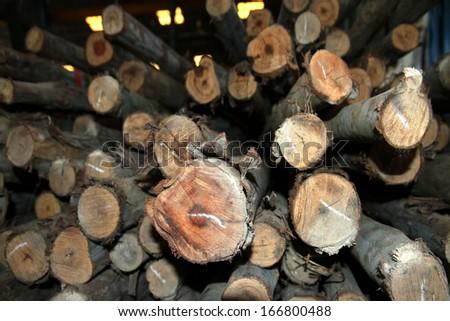 Timber background - stock photo
