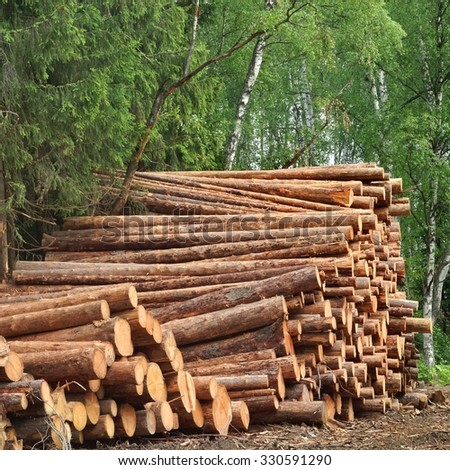 Timber Harvesting For Lumber Industry Or  Wooden Housing Construction Concept. Large Woodpile From Sawn Debarked Pine Wood Logs - stock photo