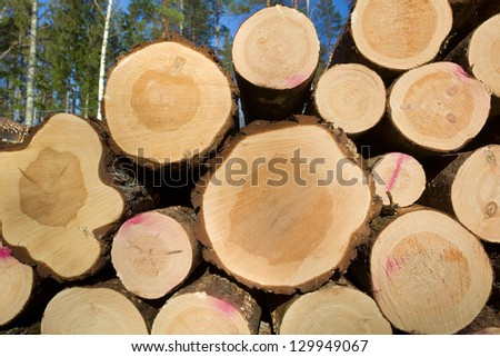 Timber in forest