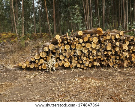 Timber in storage for later processing at a sawmill  - stock photo