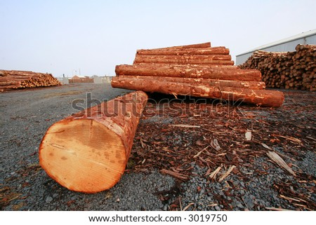 Timber (landscape) - stock photo