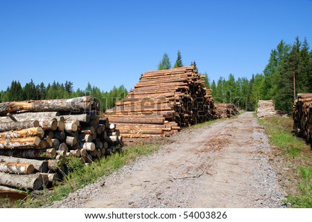 Timber Logs by Forest Road - stock photo