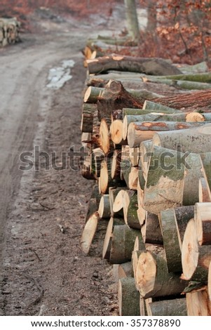 Timber logs stacked in the forest by ground road
