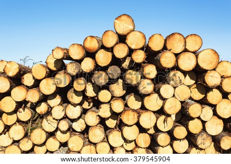 Timber pile in the woods - stock photo