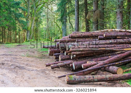 Timber stack by the forest road - stock photo