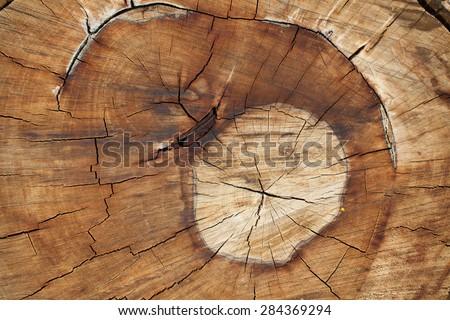 Timber texture. - stock photo