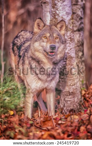 Timber wolf portrait - stock photo