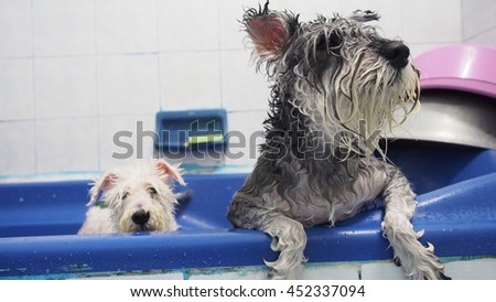 Time for taking a bath with lovely dogs