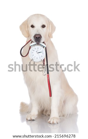 time to walk the dog - stock photo