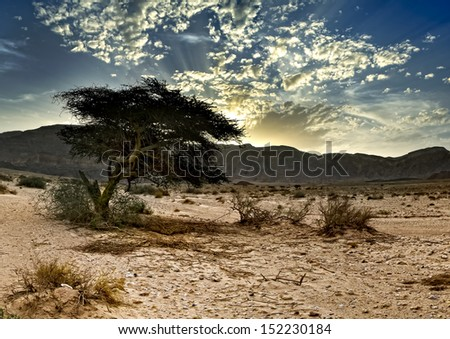 Timna park in desert of the Negev, Israel - stock photo