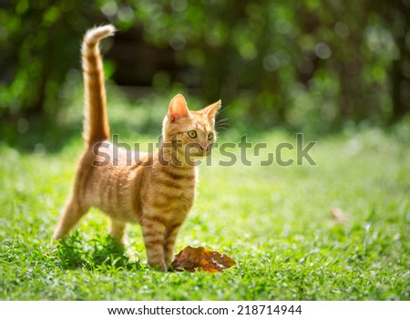tiny adorable red kitten outdoor - stock photo