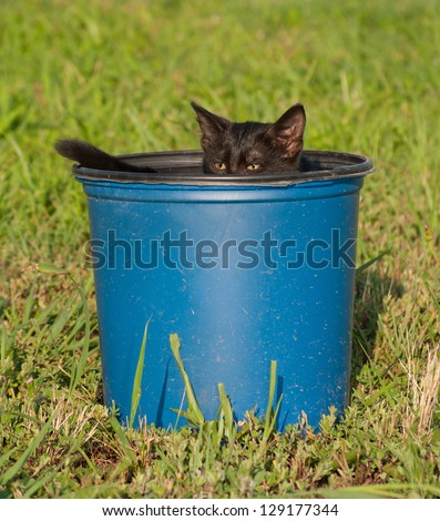 Tiny black kitten in a blue plastic bucket; peeking over the edge - stock photo