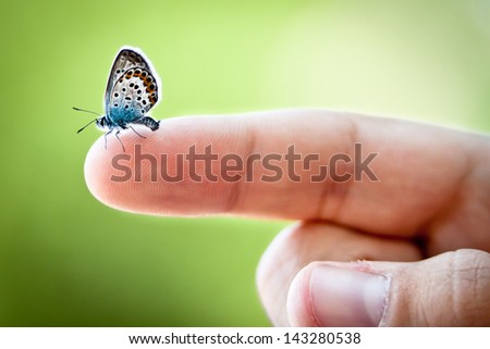 Tiny butterfly on finger