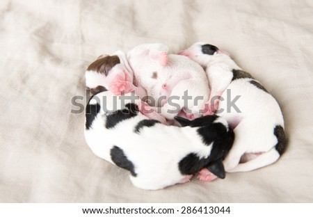 Tiny Day Old Puppies of Various Colors Sleeping in Pile