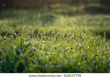 tiny drops of dew on the green grass in the early morning - stock photo